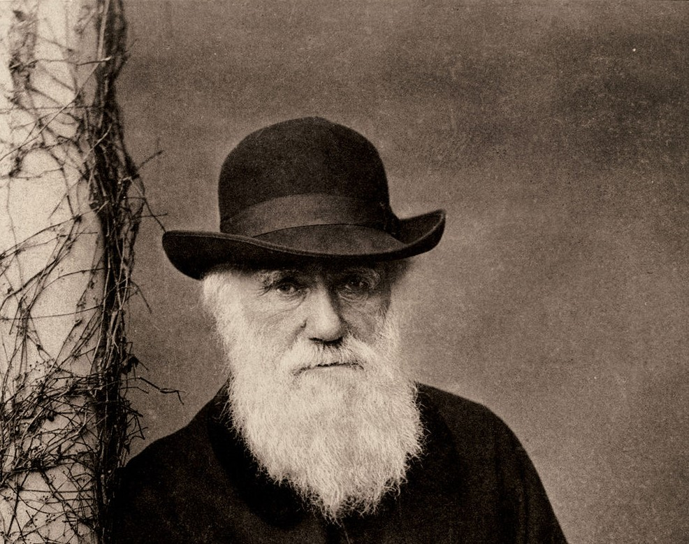 darwin on natural selection Today, most evolutionary biologists think that sexual selection by mate choice is  really a kind of natural selection so, when they see the.