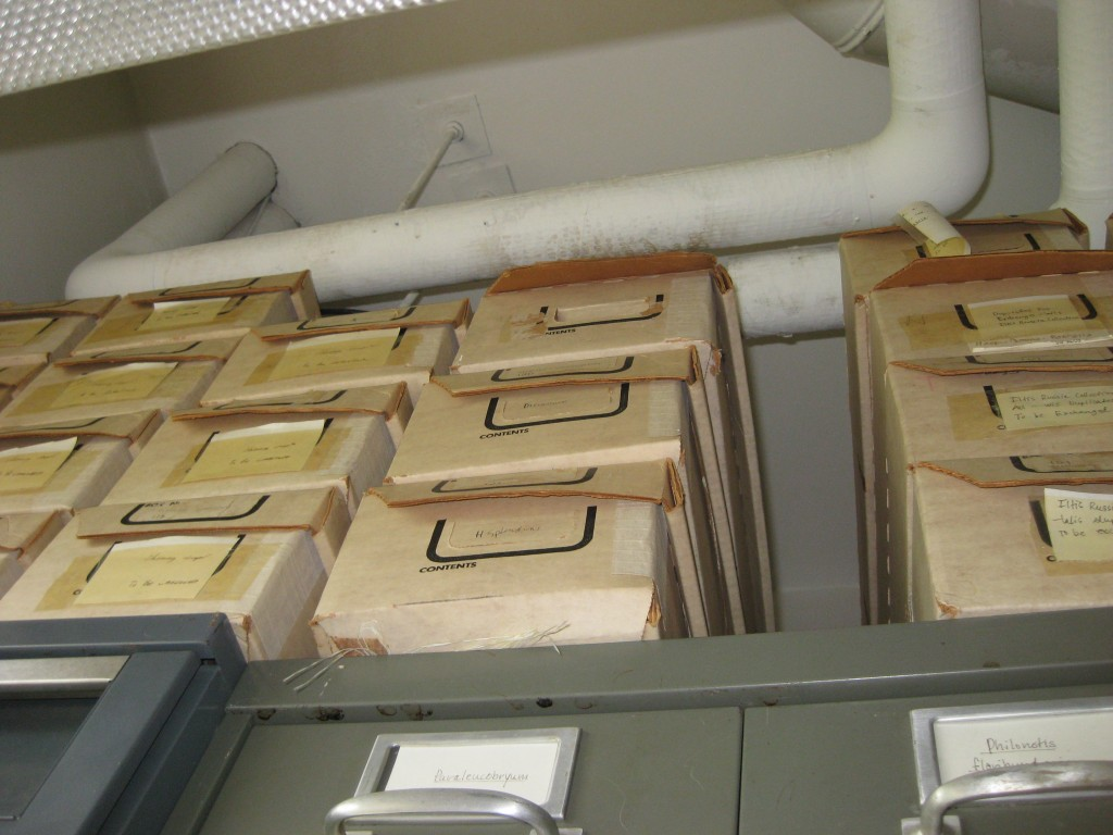 installing kitchen cabinet herbarium doubles in size prepares for another century of 1887