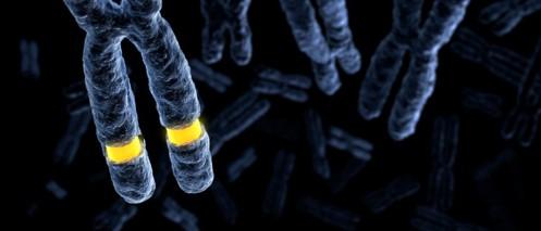Fragile X gene