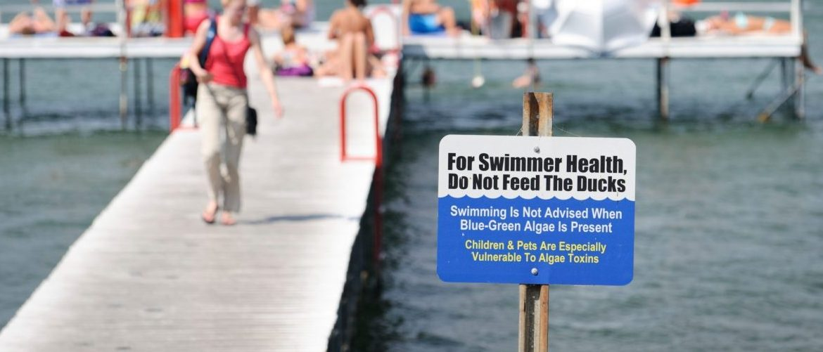 On July 16, 2012, one of several signs posted along Lake Mendota near the Memorial Union Terrace at the University of Wisconsin-Madison warn against swimming during the presence of toxic blue-green algae in the water. Known as cyanobacteria, the algae are photosynthetic bacteria that live in colonies, typically in lakes with excess fertility. (Photo by Jeff Miller/UW-Madison)