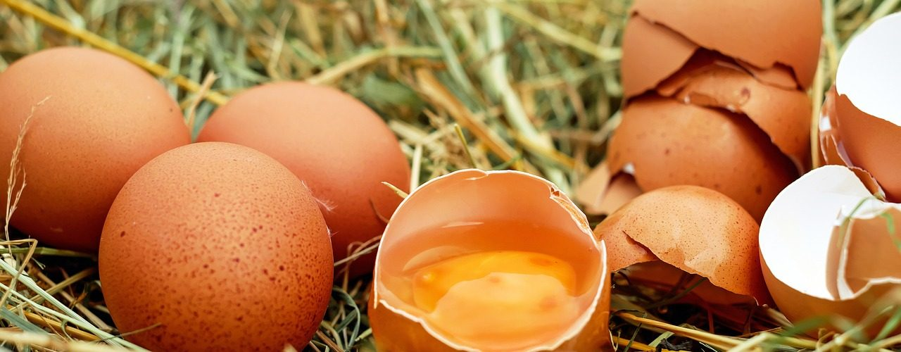 Chicken egg production varies throughout the world, though US practices may be the most rigorous.
